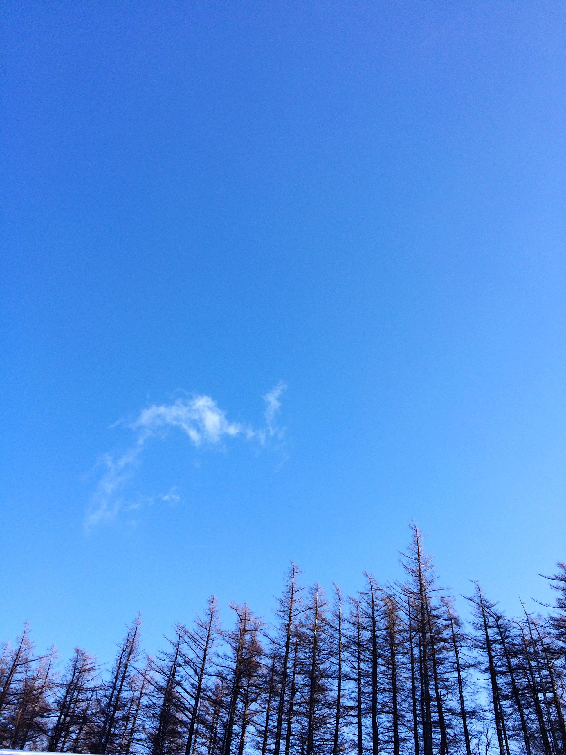 blue, low angle view, clear sky, copy space, sky, nature, tranquility, beauty in nature, growth, day, tree, outdoors, high section, scenics, no people, tranquil scene, bare tree, cloud, idyllic, sunlight