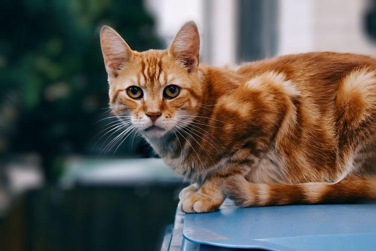 Close-up portrait of ginger cat sitting on garbage bin