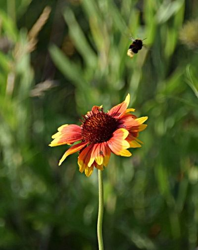 Flowers flower Bee Flower Nature Beauty In Nature Bees And Flowers Nature_collection