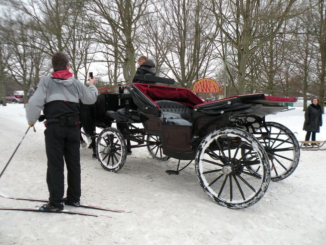 Full Length Tree Transportation Rear View Standing Mature Adult Winter Adults Only Adult Warm Clothing People Day Outdoors Snow Cold Temperature Nature Charabanc Horse-drawn Carriage Ski Skiing Jægersborg Dyrehave Dyrehaven - in Jægersborg Deer Park in Klampenborg, Denmark