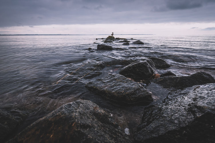 türsteher. Autumn Beauty In Nature Cloudy Coastline Day Fall Grey Sky Gull Horizon Over Water Landscape Lonelyness Nature No People Ocean Outdoors Rock - Object Sea Silence Silence Of Nature Sky Water Waves