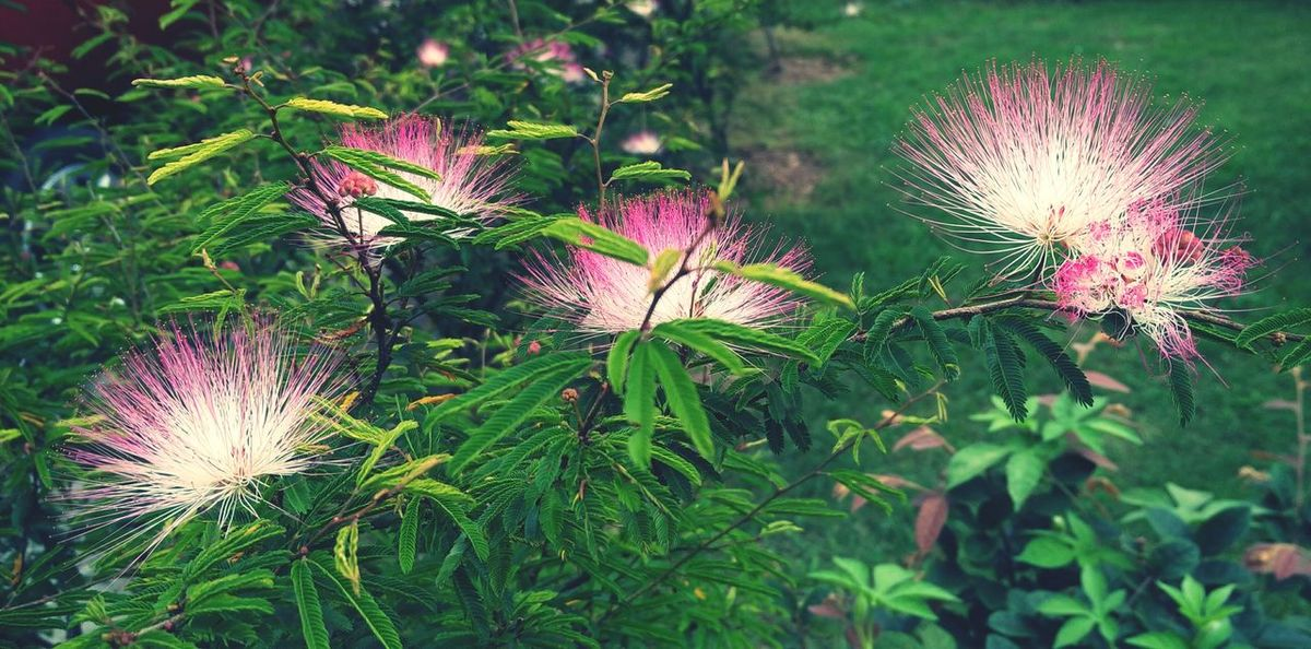 Have you ever seen the dance of the flowers. Flowers Nature Plant Flower Outdoors Growth Beauty In Nature Freshness Day Flower Head Nature EyeEm Nature Lover EyeEm Best Shots - Nature Photography EyeEmBestPics EyeEm Best Shots EyeEm Gallery EyeEm Vision EyeEmNewHere EyeEm EyeEm Selects Beautiful Nature Wonders Of Nature The Week On EyeEm