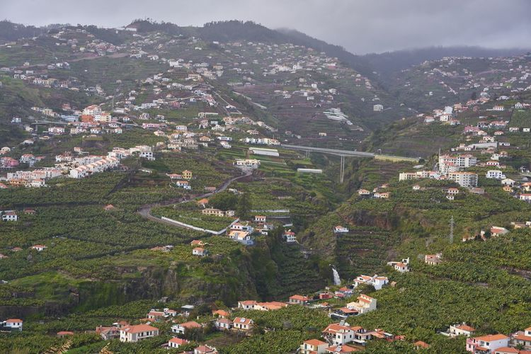 View of Miradouro da Torre viewpoint of villages in Madeira Banana Banana Tree City Cityscape Madeira Nature Panorama Portugal Portuguese Scenic Travel Tree View Aerial Aerial View Architecture Camara De Lobos Ilha Island Landscape Miradouro Mountains Outdoors Seascape Viewpoint