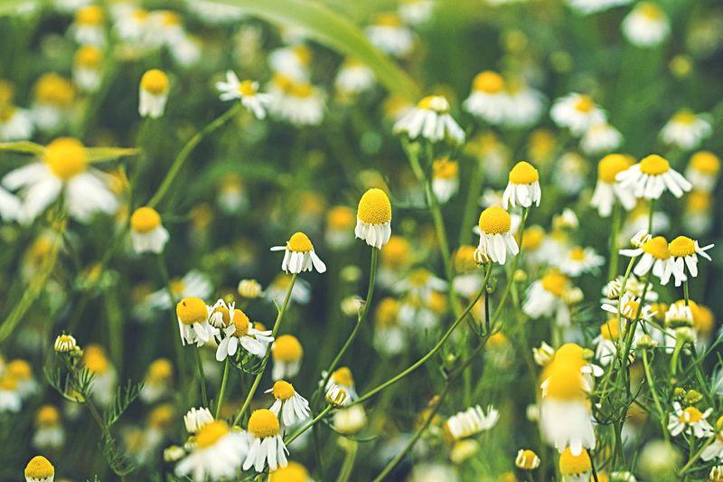 Blumen Garden
