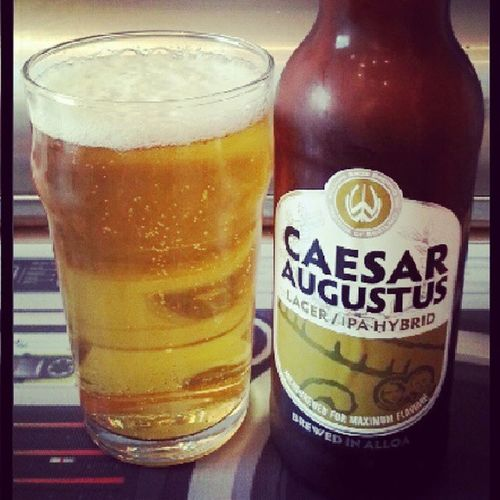 WilliamsBros Alloa Braw CaesarAugustus Saturday Relax Beer IPA Indiapaleale Pint