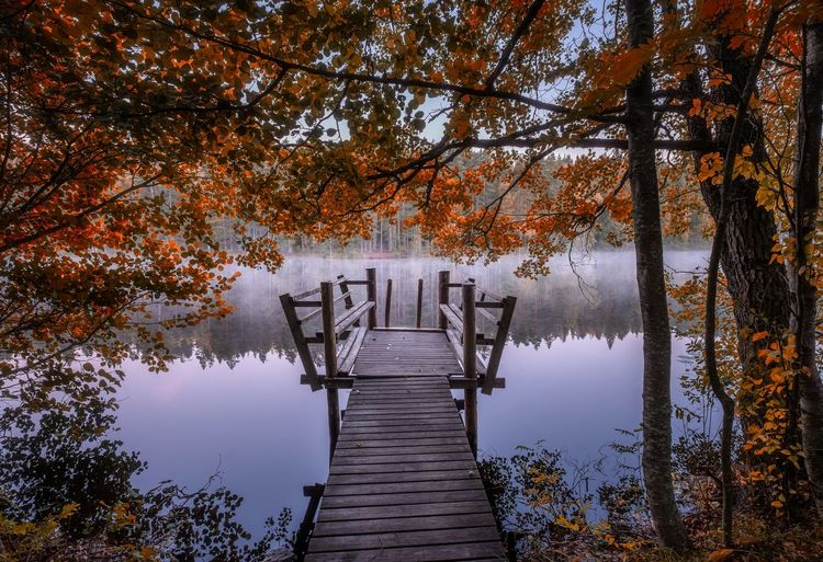 Beautiful fall colors with wooden pier and peaceful lake at autumn morning in Finland Autumn Fall Colors Finland Red Reflection Atmospheric Mood Autumn Beauty In Nature Fog Idyllic Lake Misty Morning Nature No People Orange Color Outdoors Pier Scenics - Nature Standing Water The Way Forward Tranquil Scene Tranquility Tree Water Wood - Material Autumn Mood