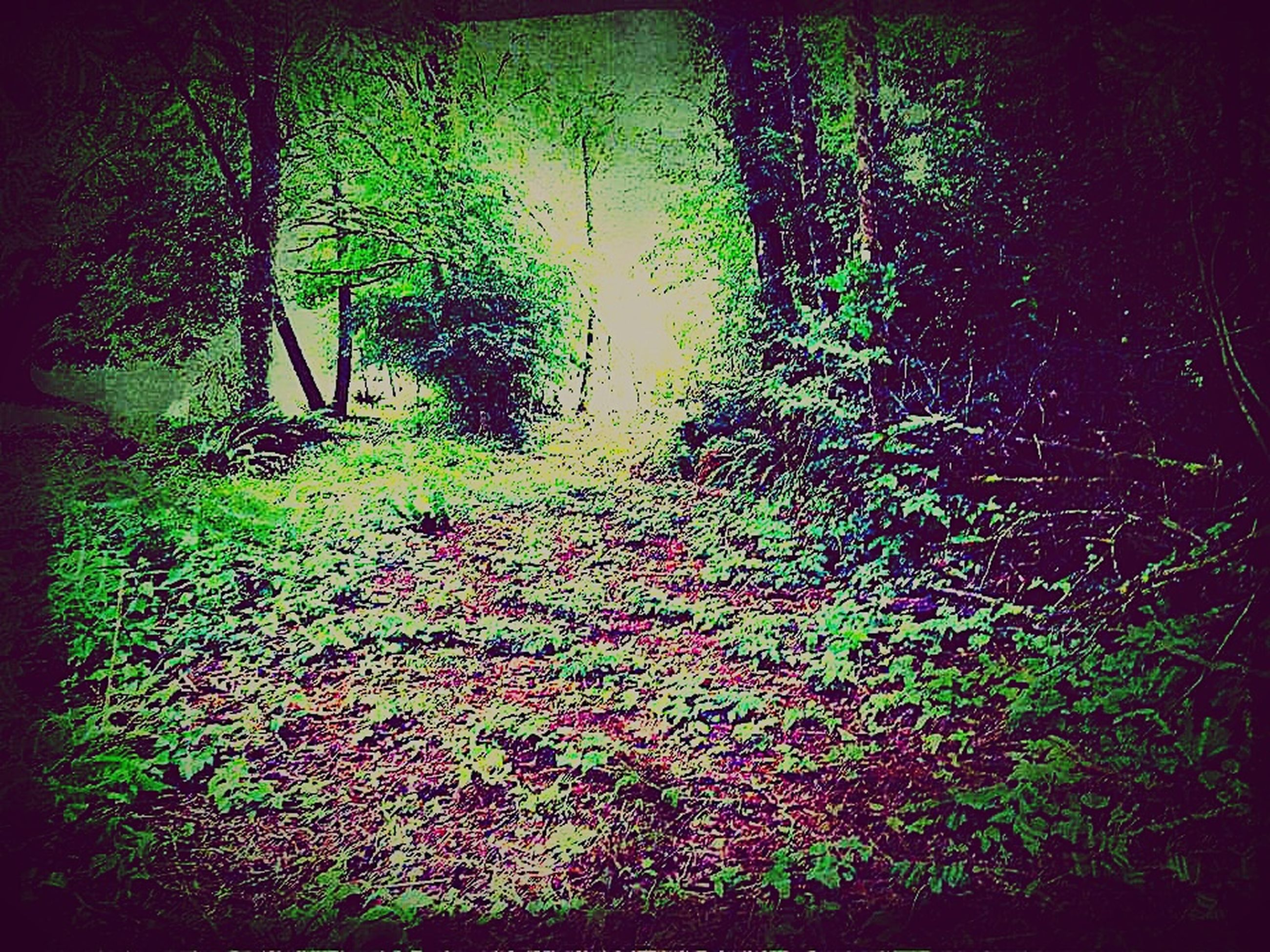 plant, tree, growth, nature, land, forest, no people, auto post production filter, vignette, day, leaf, plant part, tranquility, outdoors, green color, direction, grass, environment, dirt, tranquil scene, leaves
