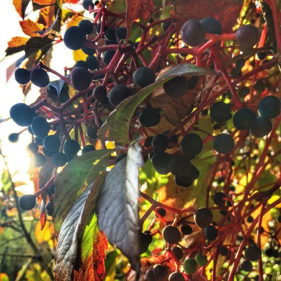 Autumn Autumn Colors