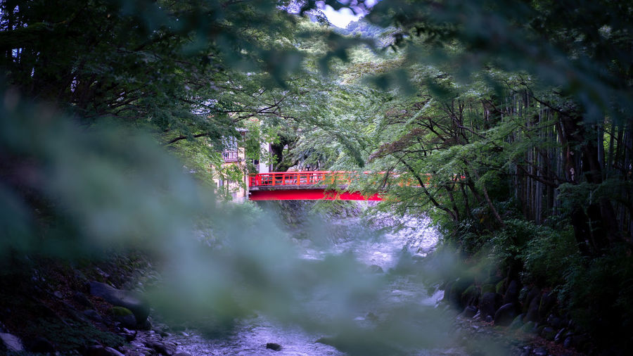 Boat sailing in river amidst trees in forest