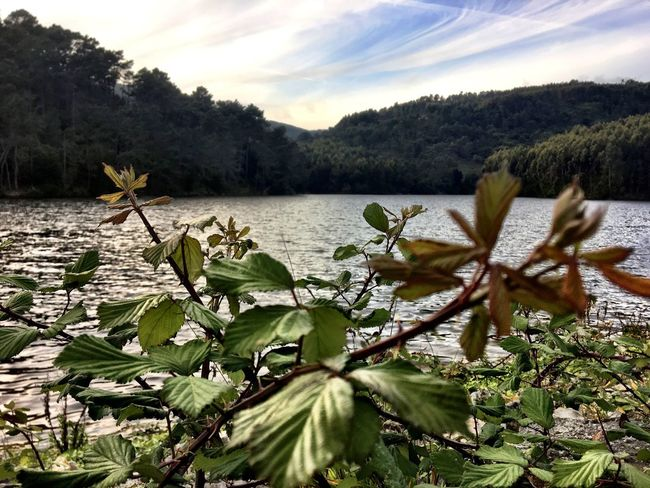 Leaf Nature Water Dam Lake Tranquility The Secret Spaces