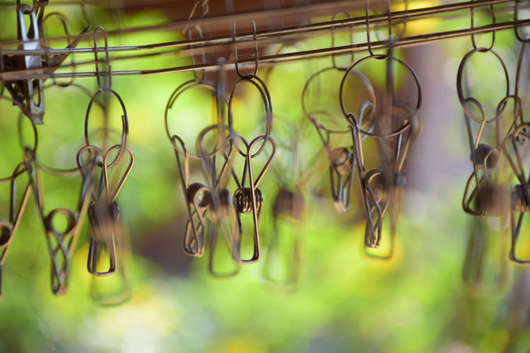 Close-up of plants hanging on metal