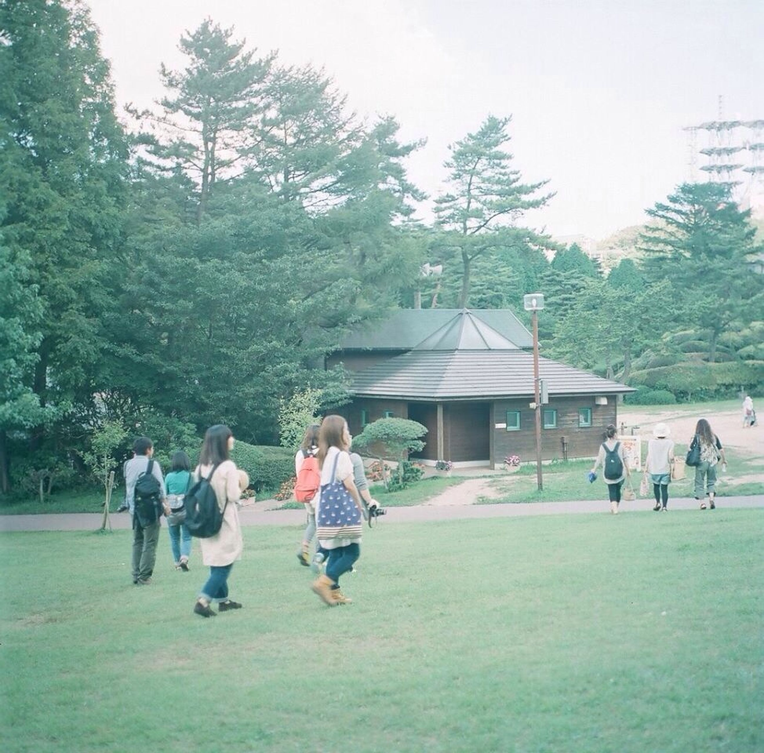 tree, men, lifestyles, leisure activity, person, large group of people, grass, green color, full length, togetherness, rear view, enjoyment, walking, medium group of people, casual clothing, park - man made space, sitting, day, mixed age range