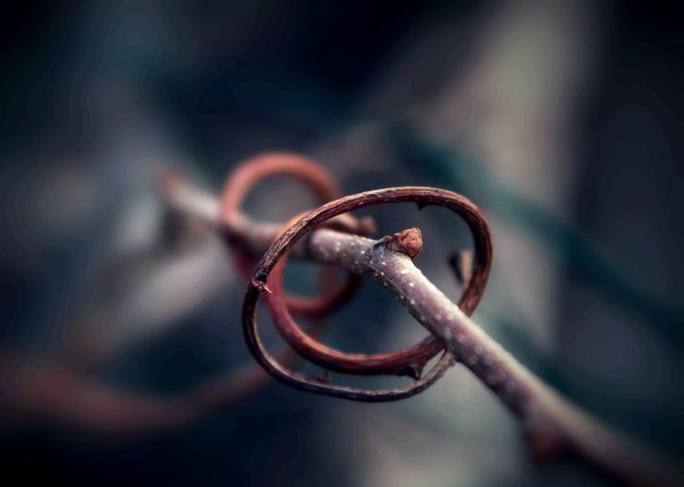 Close-up of twisted twig