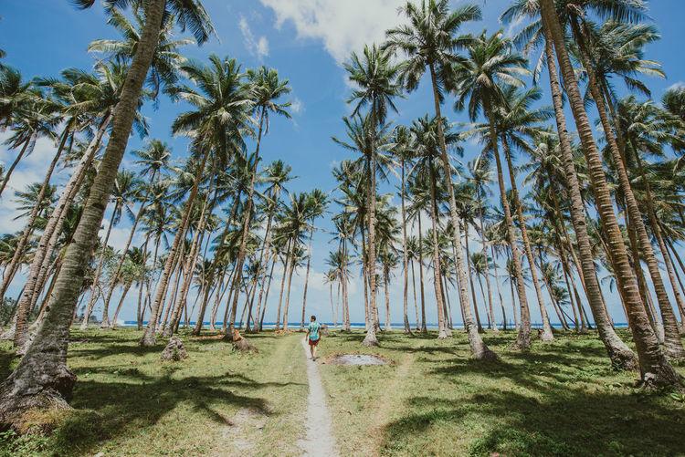 Man walking amidst palm trees at beach
