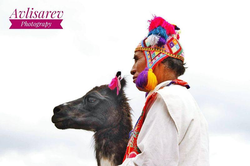 Cusco Peru Cusco Vallesagrado