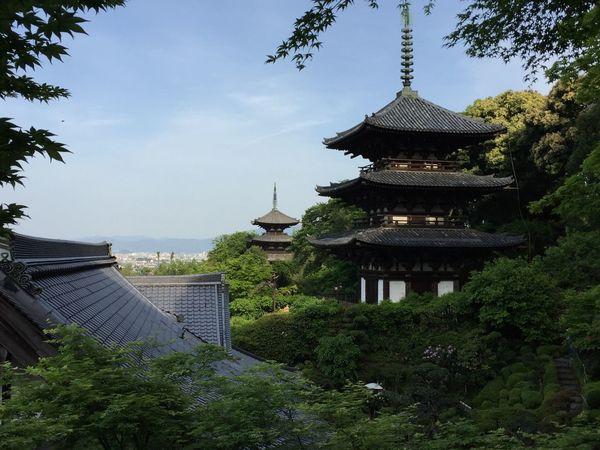 奈良 Nara ぼたん 當麻寺 Japanese Temple Japan