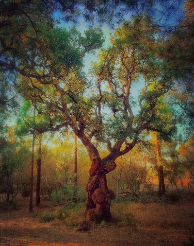 NEM Submissions EyeEm Best Shots - Landscape EyeEm Best Shots