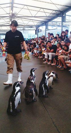フンボルトペンギン 鳥羽水族館 Aquarium