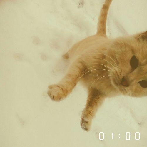 Кошка фотогегиеничней чем я
