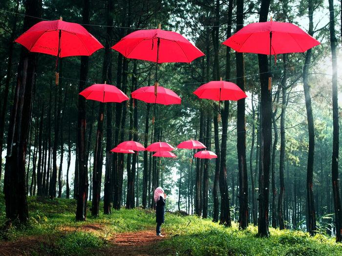 Red umbrella standing on wet land in rainy season