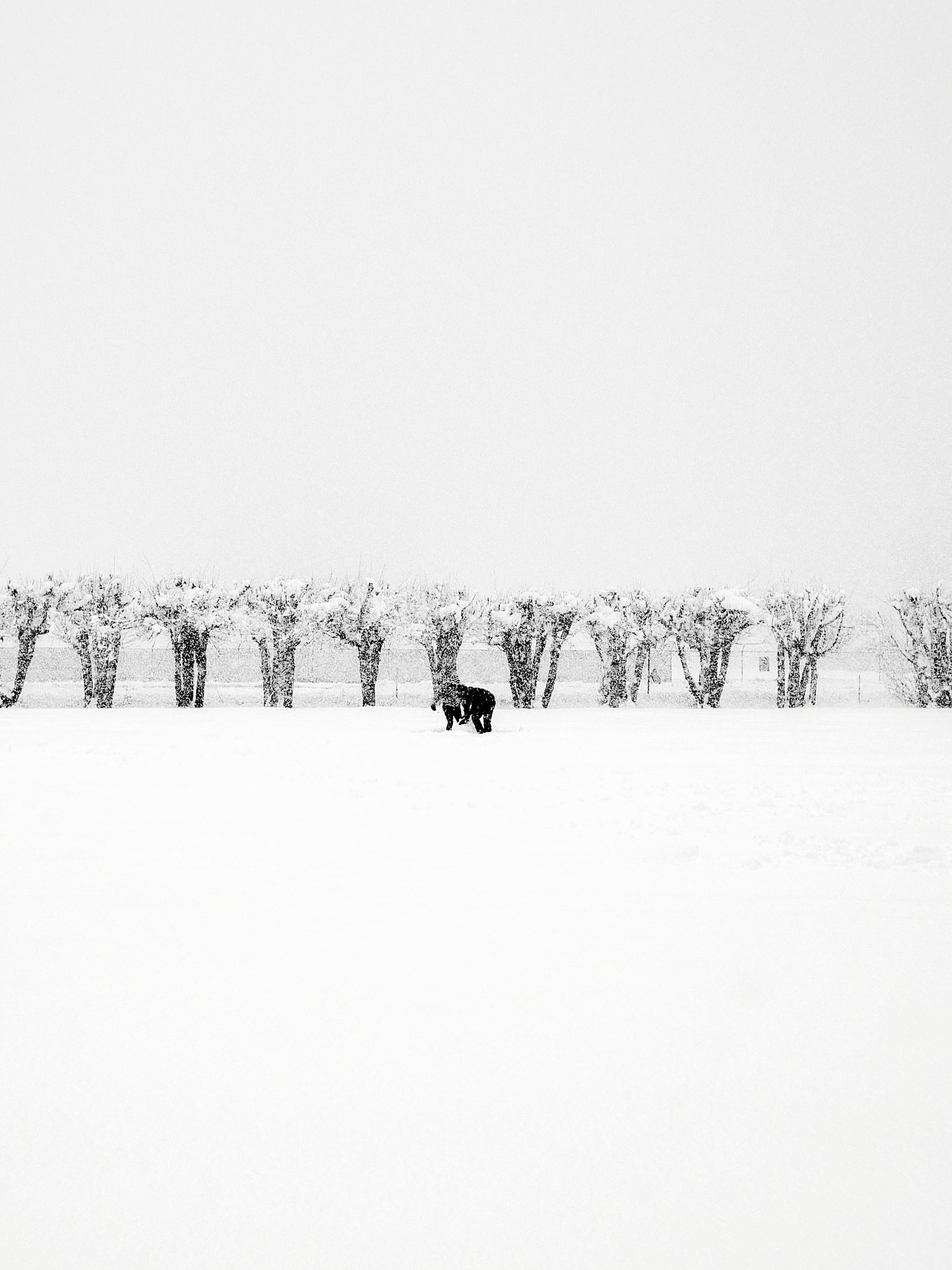 winter, snow, cold temperature, nature, animal themes, domestic animals, weather, field, beauty in nature, outdoors, tree, scenics, clear sky, tranquility, landscape, day, pets, mammal, no people, sky