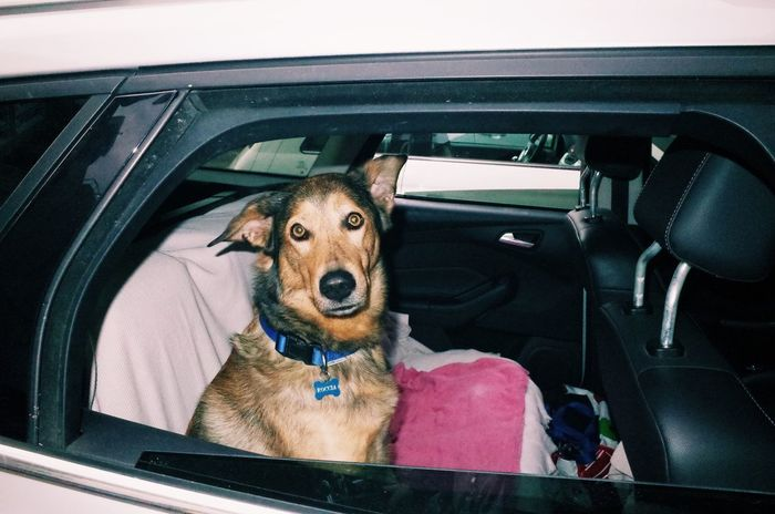 PORTRAIT OF DOG WITH CAR