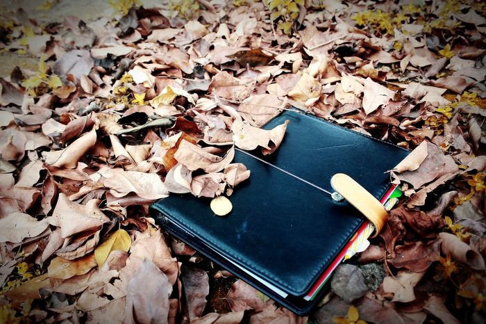 Old Poems Book Poems Book Old Book YNWA You'll Never Walk Alone High Angle View Day No People Leaf Outdoors Nature Close-up Shades Of Winter EyeEmNewHere Beauty In Nature Business Stories