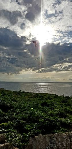 Bir yangın ormanından püskürmüş genç fidanlardı Güneşten ışık yontarlardı sert adamlardı Hoyrattı gülüşleri aydınlığı çalkalardı Gittiler akşam olmadan ortalık karardı.. (Attila ilhan) Objektifimden EyeEm Best Shots Eyem Gallery Eyem Nature Lovers  Beauty In Nature Serenity Meditation Nature Eternity And A Day Outdoors Sea And Sky Cloud - Sky Cloud EyeEm Selects Historical Place Doğu'nun Masalları Çarpanak Adası, Van 6Mayıs1972 üçfidan Water Flying Sea Bird Mid-air Spraying Sky Horizon Over Water