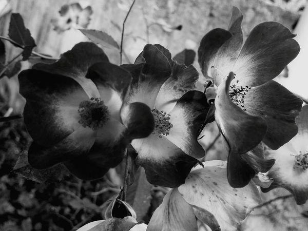 Blackandwhite 50shadesofgrey FiftyShadesOfGrey Black And White Black And White Photography Black + Black - White Nature_collection Natureblackandwhite Black&white