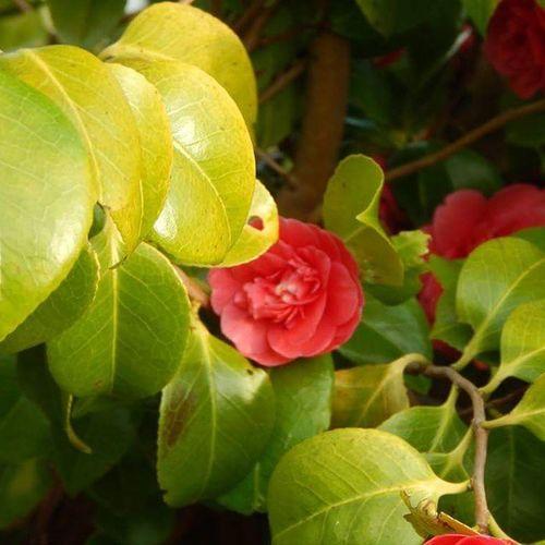 I have some nice flowers in my garden 🌹 Blodyn Flower Gwanwyn Spring Rosyn Rosé Nofilter 1/3 Cymru Wales Nikon