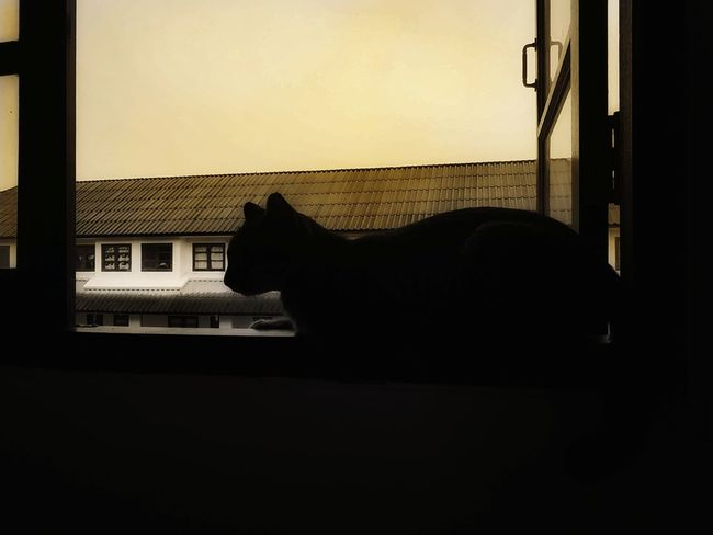 Good morning . #Thailand #sky #effect #photo #cat Silhouette Window Close-up Architecture Sky Built Structure
