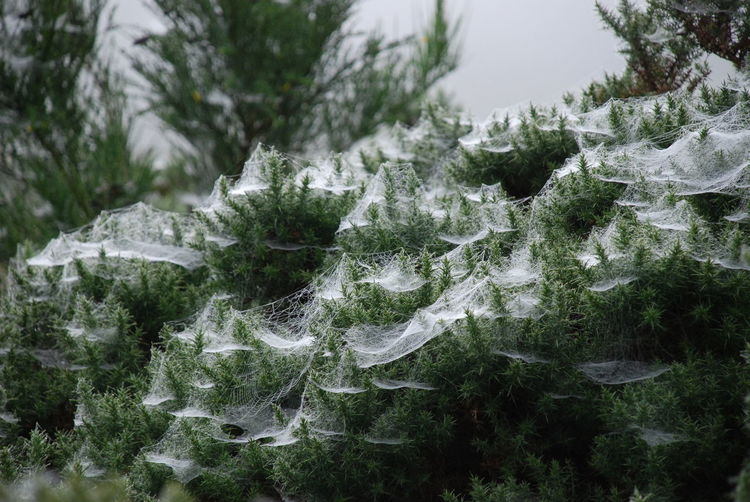 Beauty In Nature Close-up Cobwebs On Plant Cold Temperature Crystal Day Freshness Frozen Ice Ice Crystal Morning Dew Nature No People Outdoors Plant Snow Water Winter