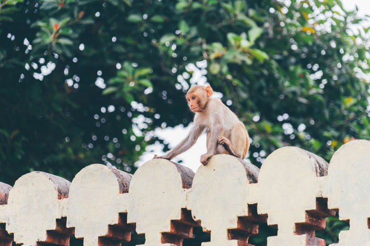 Monkey on retaining wall by tree