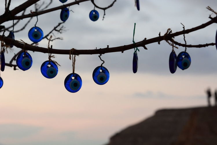 Close-up of multi colored lights hanging on branch