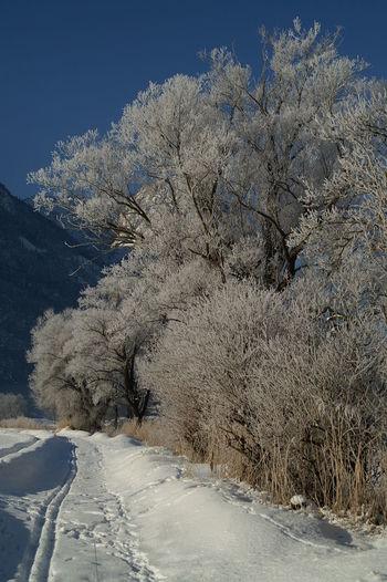 Schweiz Switzerland Wallis Leuk Winter Wintermorgen Weg Baum Himmel Blauer Himmel Kalt Natur Eis Clear Sky Ice Beauty In Nature Nature Sky Blue Sky
