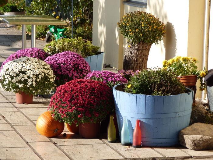Multi colored flower pots on footpath
