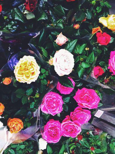 Nature Flowers Rosé Pink Color