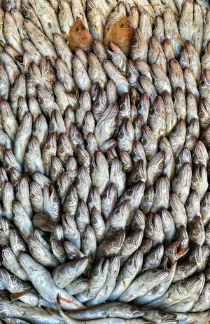 Full Frame Backgrounds No People Pattern Abundance Large Group Of Objects Day Close-up Outdoors Pesce Pesci Pesca