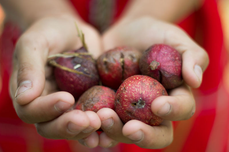 Cropped Image Of Hand Holding Figs