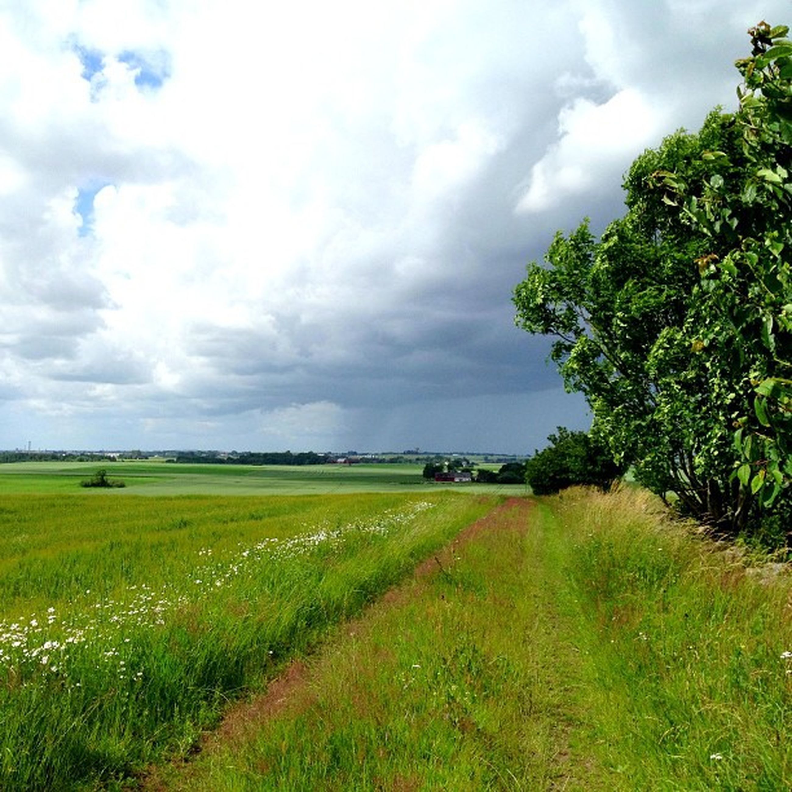 sky, grass, field, landscape, tranquil scene, tranquility, cloud - sky, scenics, cloudy, green color, beauty in nature, cloud, growth, nature, rural scene, agriculture, grassy, tree, farm, idyllic