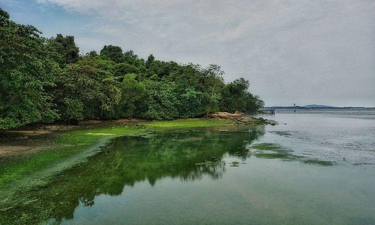 Reflected Glory Reflection Chek Java Chekjawa Pulau Ubin Singapore