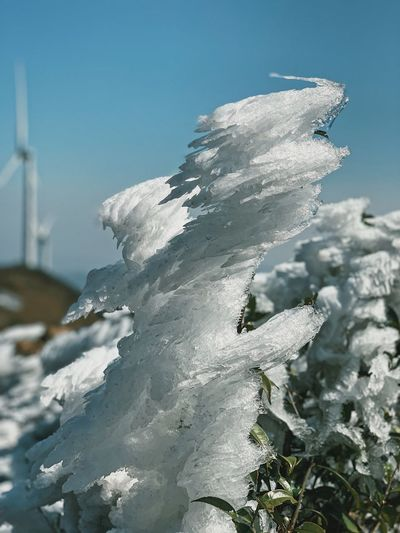 Close-up of frozen plant against clear sky