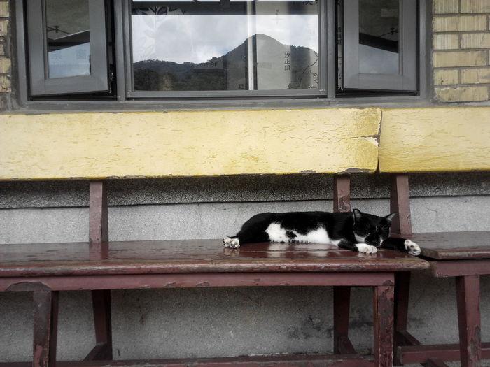Cat Pets No