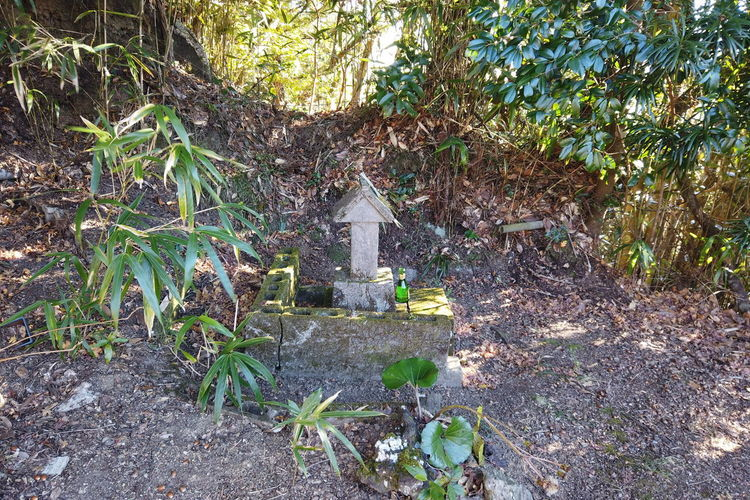 Japan Travel Destinations Countryside Lifestyles Japan Travel Japan Trip  Landscape Japanese Culture Plant Tree Nature Day No People Growth Land Plant Part Leaf Field Outdoors Grave Cemetery Forest Solid Built Structure Tranquility Tombstone Green Color Sunlight
