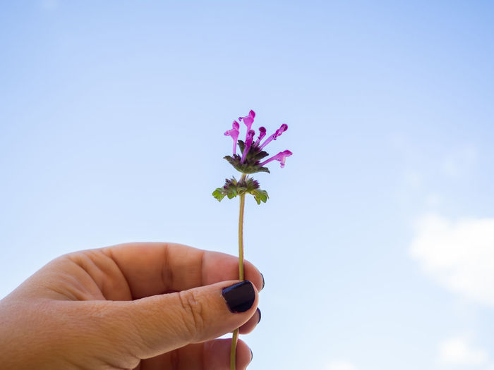 Close-up of hand holding red flowering plant against sky
