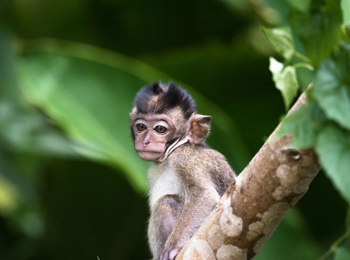 Animals In The Wild Green Leafs Macaque Monkey Nature Outdoors Rainforest Wildlife