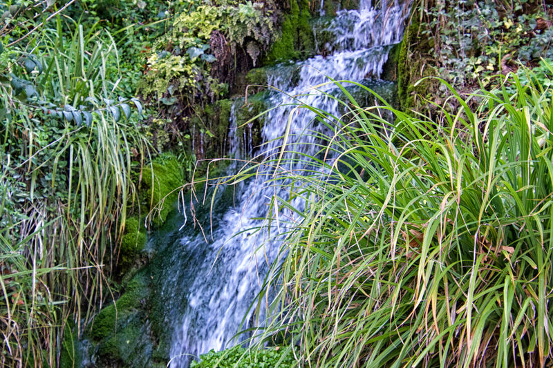 Water Plant Beauty In Nature Flowing Water Waterfall Scenics - Nature Nature Motion Forest Flowing Growth Green Color No People Land Long Exposure Tree Day Blurred Motion Environment Outdoors Rainforest Stream - Flowing Water Power In Nature