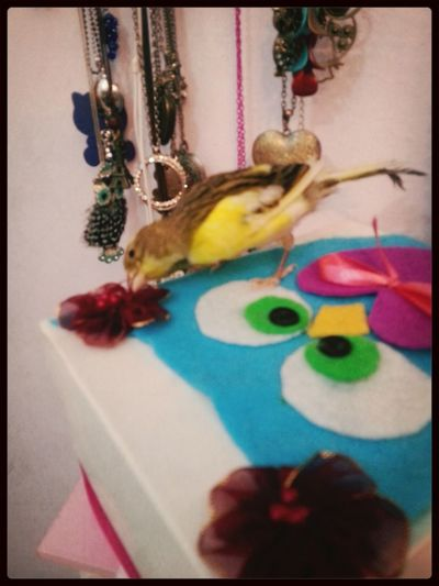 look how cute jack jack is playing with my box :$ Cute Bird Love Him Bird