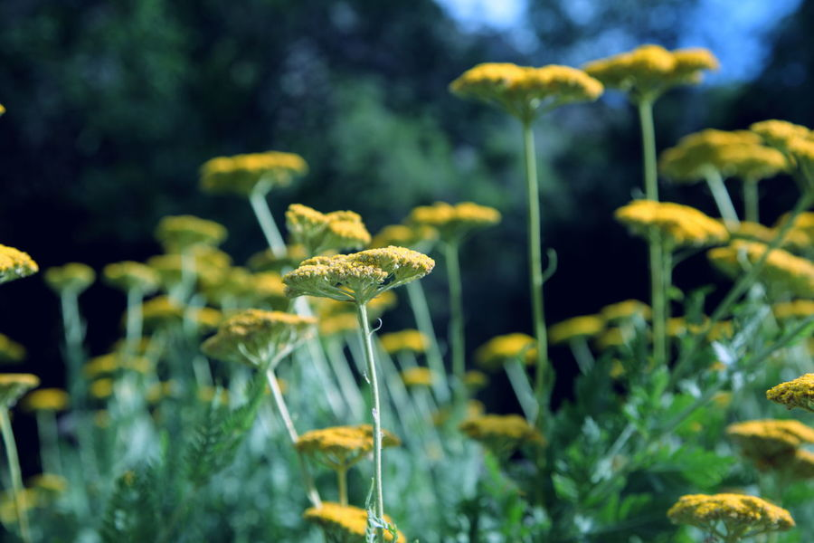 Allergies Beauty In Nature Blooming Day Flower Focus On Foreground Getaway  Green Growing Growth Honeymoon July Nature No People Ogden Ogden Canyon Outdoors Plant Stem Summer Utah Vacations Verde Weeds Yellow