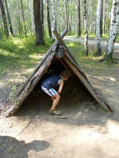 Little Boy in wooden tent in Russian birch forest, open air museum Siberia Birch Forest Boy Child Childhood Forest Leisure Activity Lifestyles Nature One Person Outdoors Playing Real People Shelter Wooden Tent WoodLand